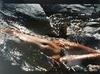 Lucien CLERGUE - Fotografia - Femme Nue dans l'eau