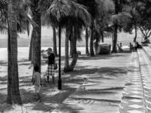 Dominique POILPRE - Photography - A l'ombre des palmiers