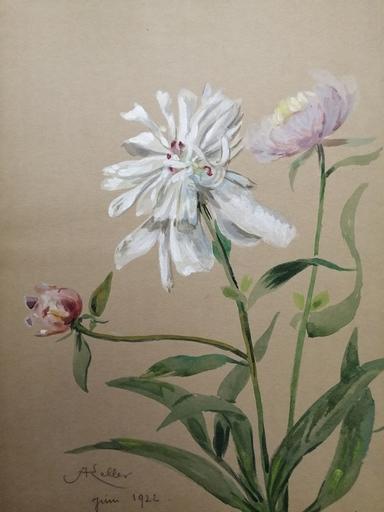 Alfred KELLER - Drawing-Watercolor - Pivoine