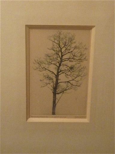 Jacques HOUPLAIN - Grabado - Le petit arbre