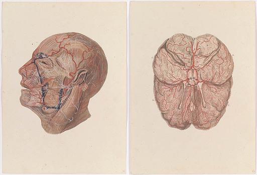 Johann Daniel W. HARTMANN - Drawing-Watercolor - Two Anatomical Studies