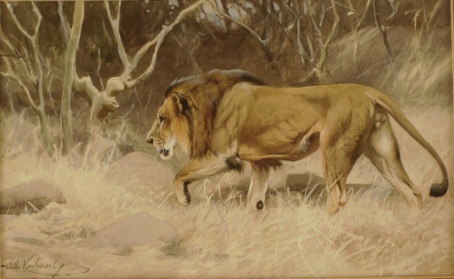 Wilhelm KUHNERT - Drawing-Watercolor - LION