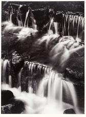 Ansel Easton ADAMS - Photography - Fern Spring, Dusk, Yosemite Valley