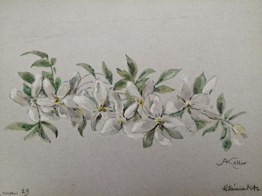 Alfred KELLER - Drawing-Watercolor - Clématite