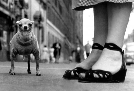 Elliott ERWITT - Fotografie - New York City