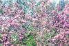 AKKADIA - Estampe-Multiple - Les Jardins de Bagatelle 2016 II