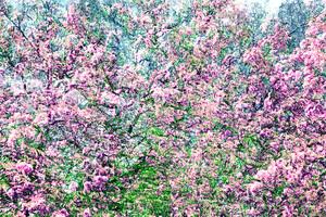 AKKADIA - Stampa-Multiplo - Les Jardins de Bagatelle 2016 II