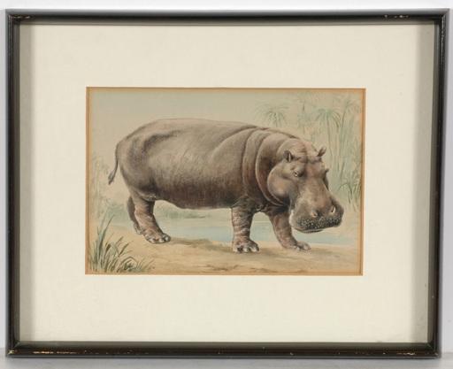 """Louis MORIN - Drawing-Watercolor - """"Hippopotamus"""" watercolor, ca. 1900"""
